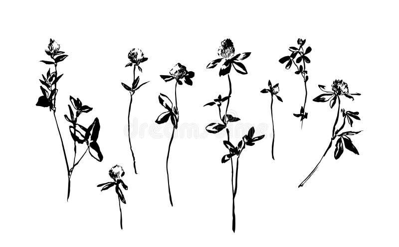 套手拉的三叶草花 速写或乱画杂草领域草本的传染媒介例证 在白色背景的黑图象 皇族释放例证