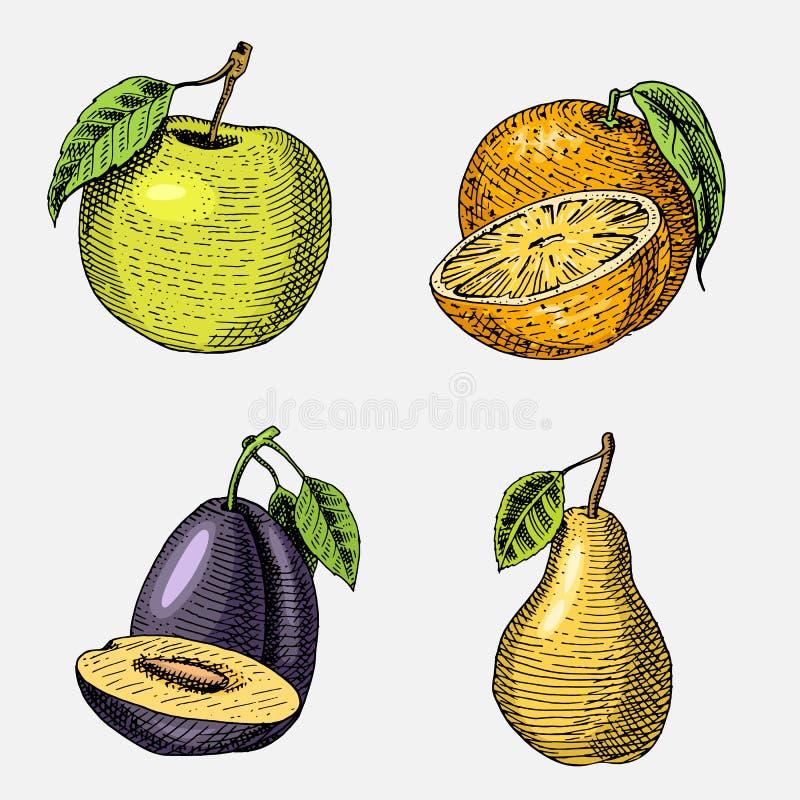套手拉,被刻记的新鲜水果、素食食物、植物、葡萄酒看起来绿色苹果的,桔子和梨,李子 皇族释放例证