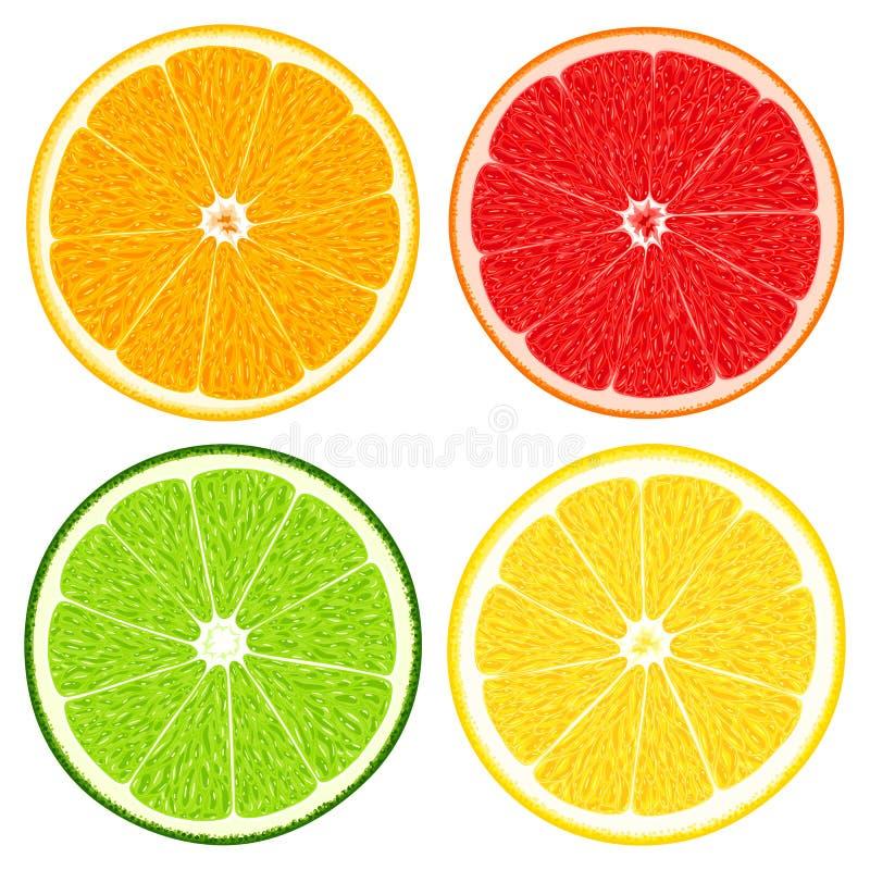 套新鲜的水多的切的柑橘水果-桔子、柠檬、石灰和葡萄柚 向量例证