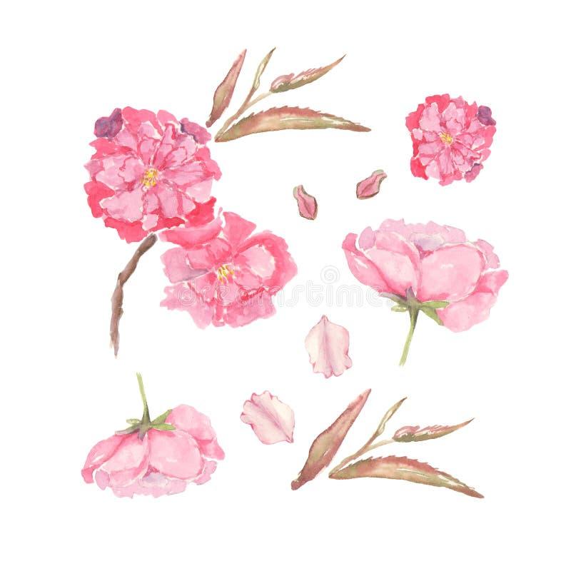 套桃红色苹果计算机和樱桃的水彩例证开花 邀请,电影海报设计的元素  皇族释放例证