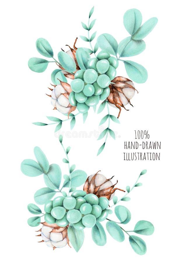 套棉花花、玉树分支和其他植物花束例证 库存例证