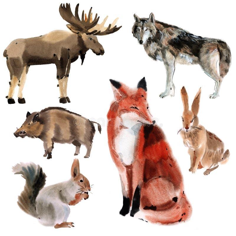 套森林动物 水彩例证在白色背景中 皇族释放例证
