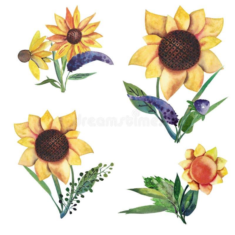 套水彩元素:狂放的紫罗兰色花,草本,叶子,向日葵 花卉构成 库存例证