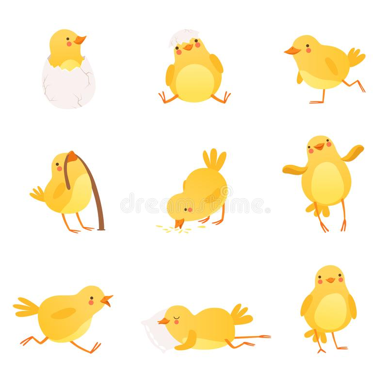 套滑稽的黄色鸡以各种各样的情况 一点农厂鸟漫画人物  被隔绝的平的传染媒介设计 库存例证