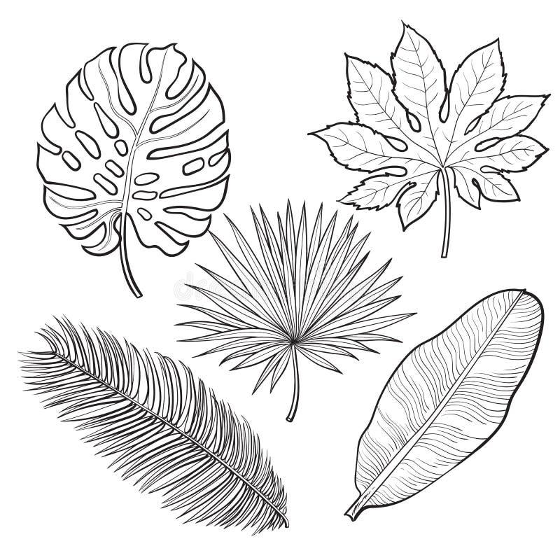 剪影样式在白色背景的传染媒介例证 monstera,香蕉,作为密林的棕榈树图片