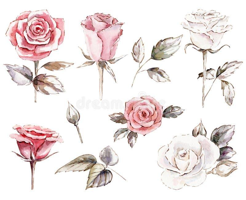 套玫瑰cliparts 向量例证