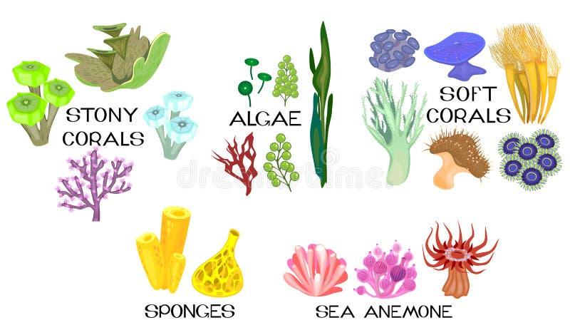 套珊瑚,海葵,海绵,在白色背景的海洋海藻的另外种类 向量例证