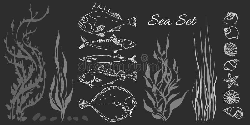 套白海鱼,海草,贝壳 栖息处,鳕鱼,鲭鱼,比目鱼, saira 皇族释放例证