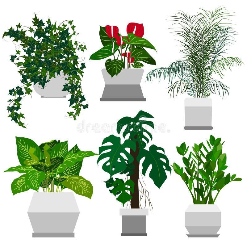 套盆的室内植物 向量例证