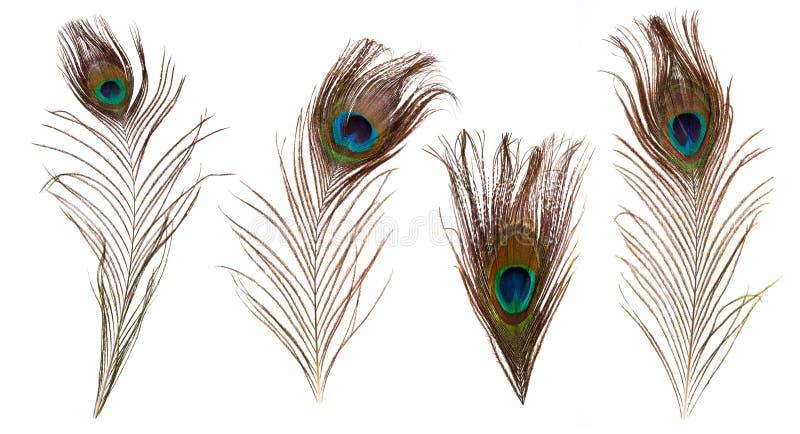 套美丽和五颜六色的孔雀羽毛 免版税库存照片