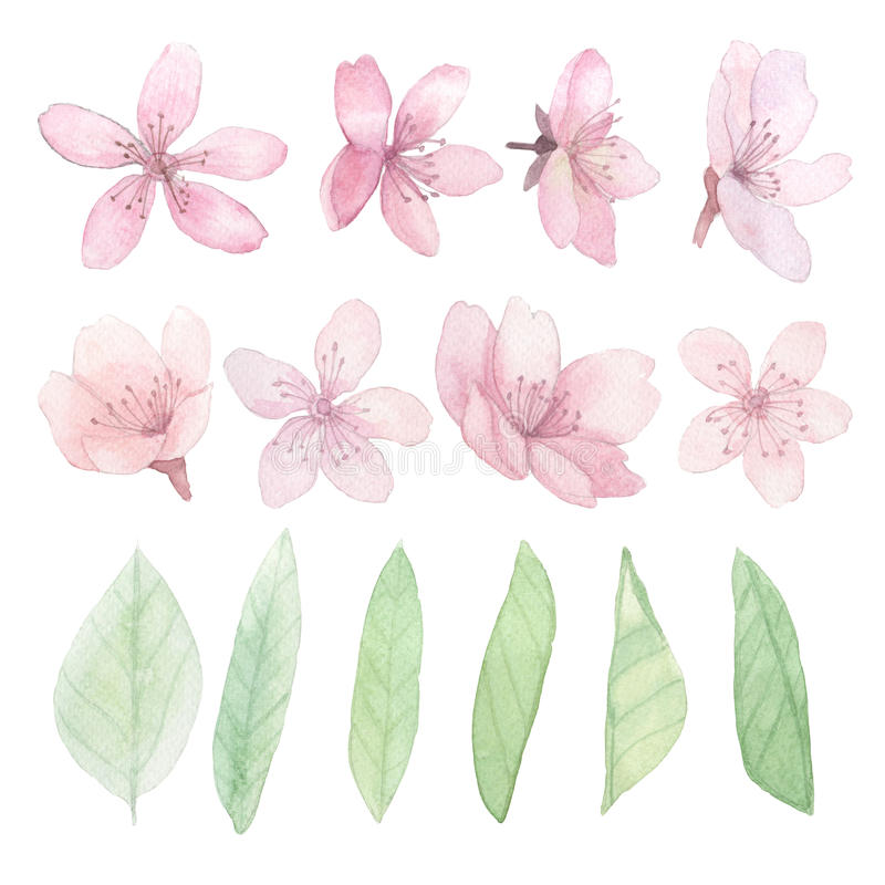套花、叶子和分支 向量例证