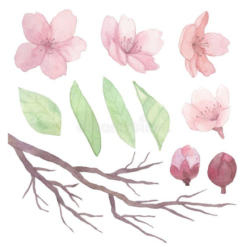 套花、叶子和分支 皇族释放例证