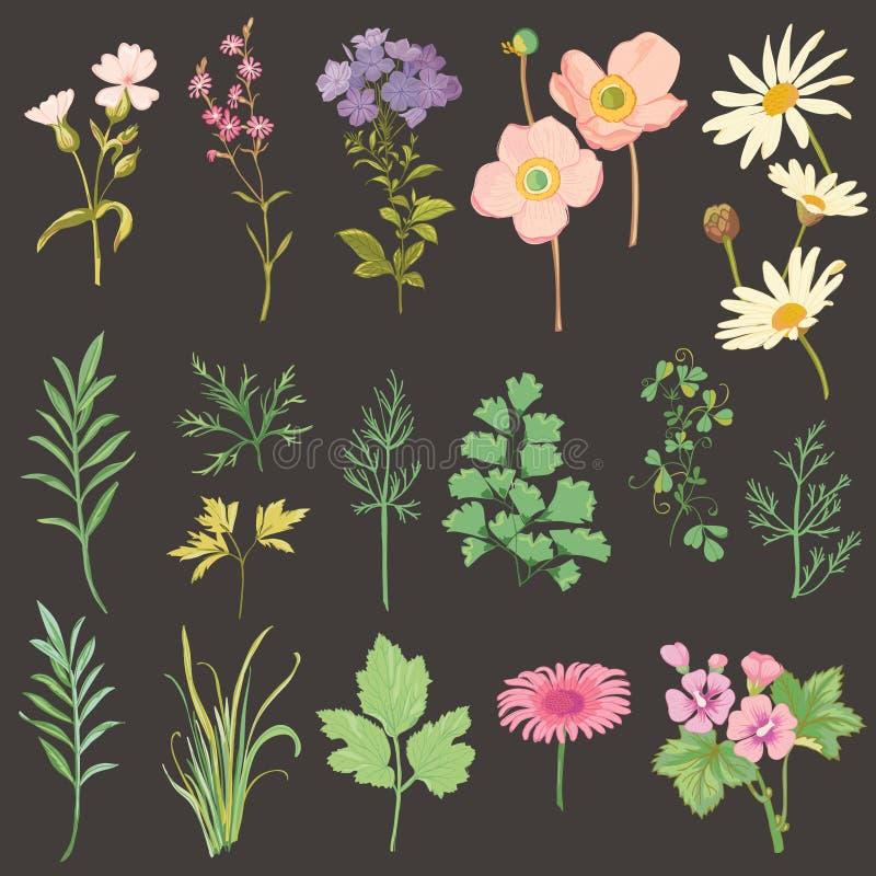 套花和草本 向量例证