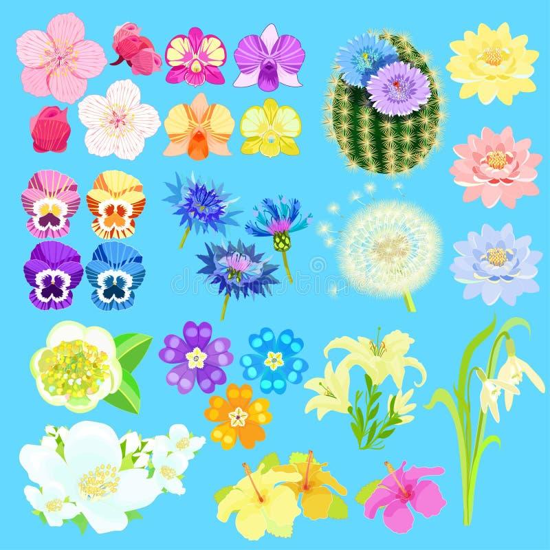 套莲花,日本樱桃,兰花,仙人掌 向量 皇族释放例证