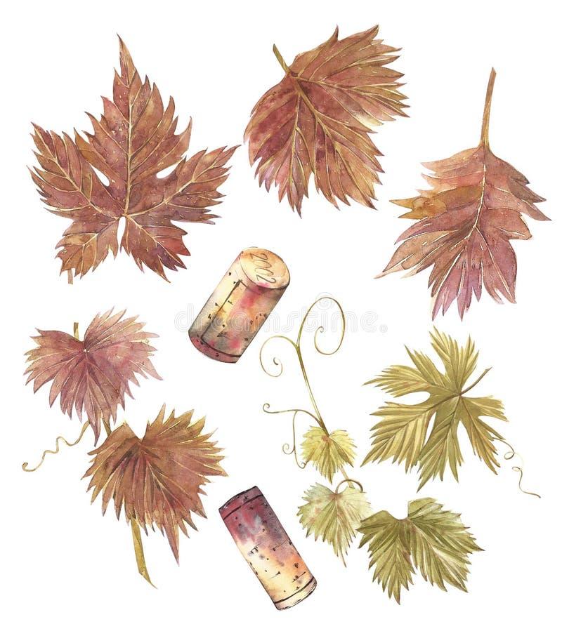 套葡萄叶子 查出的空白背景 手拉的水彩例证 皇族释放例证