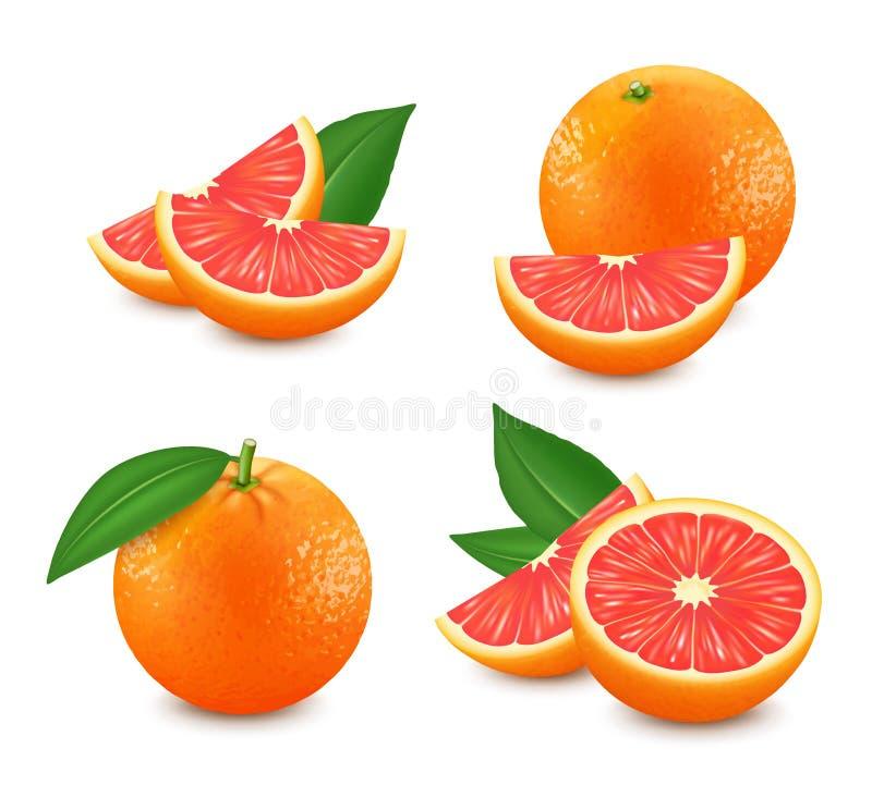 套被隔绝的葡萄柚 现实柑橘图象 3d向量 库存例证