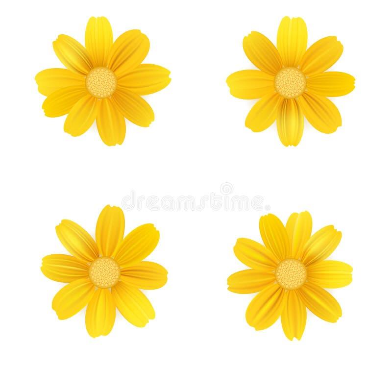 套被隔绝的黄色大丁草或雏菊 在白色背景的传染媒介五颜六色的花 T恤杉的模板,时尚 向量例证