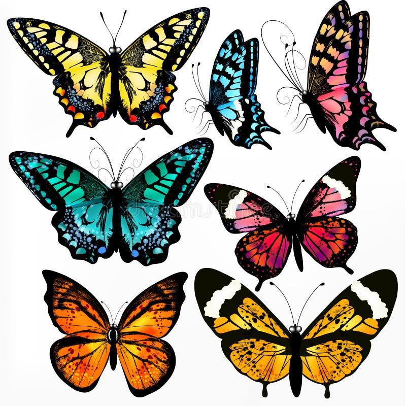传染媒介现实蝴蝶的五颜六色的收藏设计的 皇族释放例证