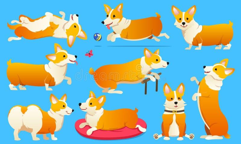 套逗人喜爱的狗养殖威尔士在蓝色背景的小狗彭布罗克角 一只家养的宠物,女孩的一个愉快的皇家动物 滑稽 向量例证