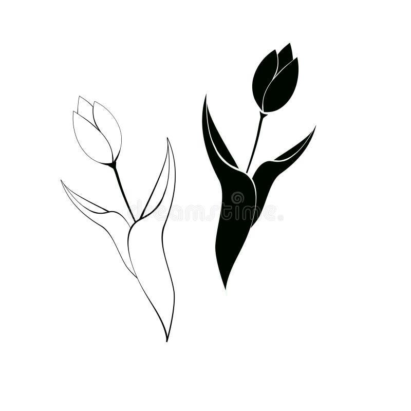 套郁金香花图表黑白色隔绝了剪影例证 免版税库存图片