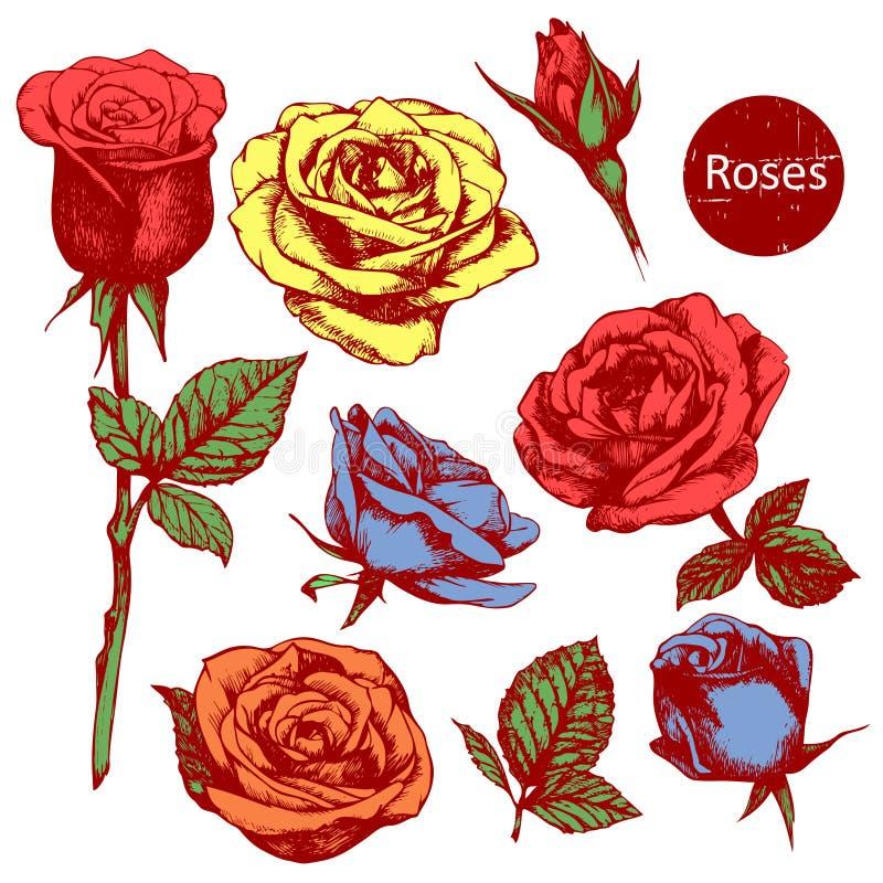 套高度详细的五颜六色的手拉的玫瑰 向量例证