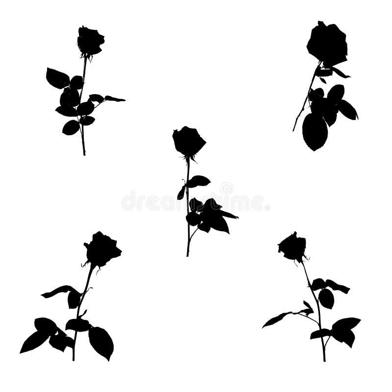 套黑白剪影上升了 背景查出的白色 也corel凹道例证向量 皇族释放例证