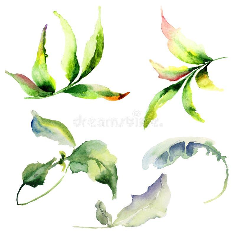 套水彩叶子 向量例证