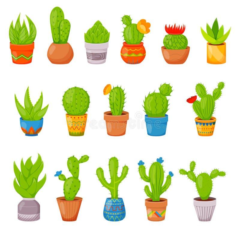 套16棵仙人掌和多汁植物在花盆 有皮刺和花的家庭仙人掌植物 异乎寻常热带 皇族释放例证