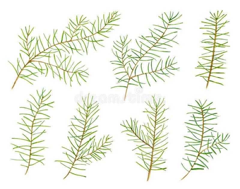 套7绿色水彩杉木为您的设计分支 名片的,横幅,海报,笔记本模板 向量例证