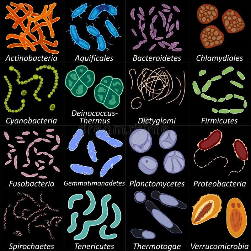 套bacterias的不同的类型在黑背景,传染媒介例证的 皇族释放例证