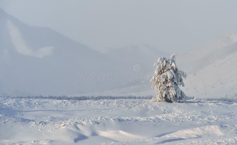 奥伊米亚康冬天风景  雅库特,俄罗斯 图库摄影