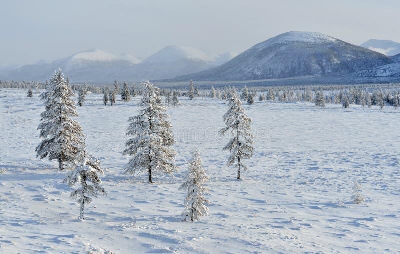 奥伊米亚康冬天风景  雅库特,俄罗斯 免版税库存图片