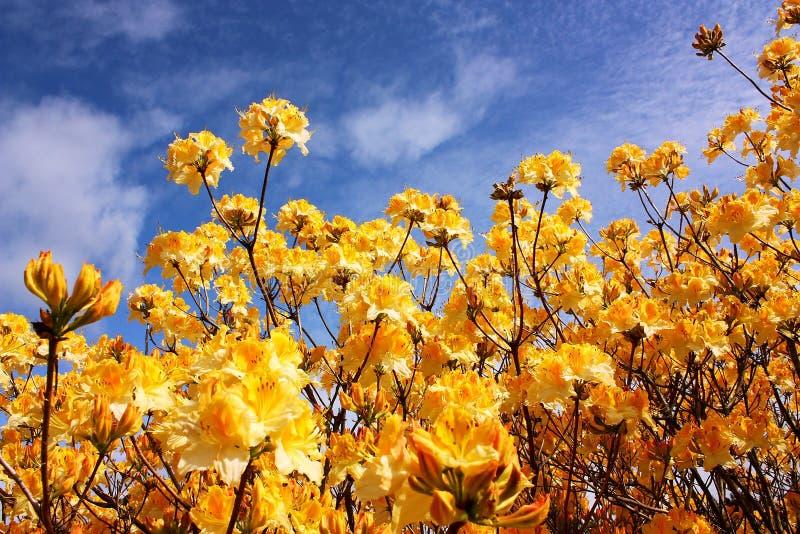 奥克兰开花新的春天西兰 库存照片