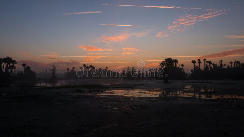 奥兰多沼泽地 库存图片