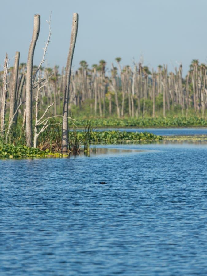 奥兰多沼泽地 库存照片
