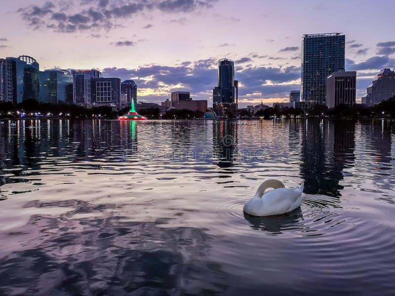 奥兰多,佛罗里达,美国- 2018年12月:在Eola湖公园紫色日落的,街市奥兰多的天鹅 库存照片