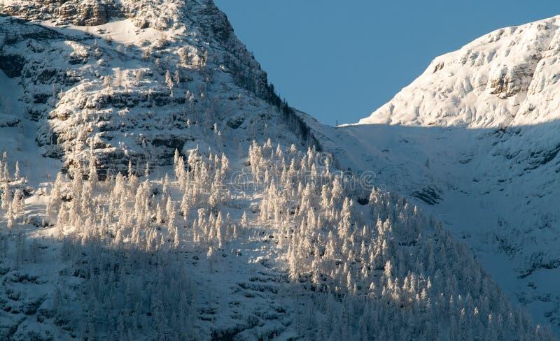 奥地利冷山多雪的冬天 免版税库存图片