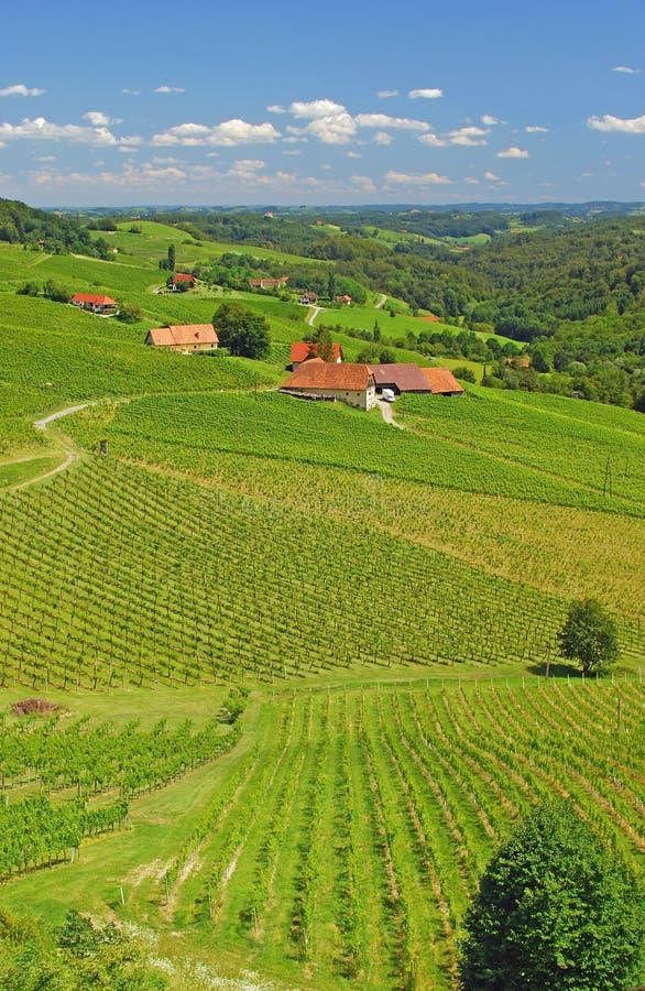 奥地利施蒂里亚葡萄园 免版税库存照片