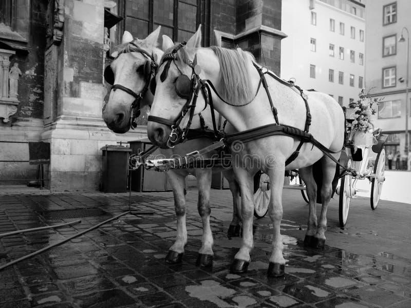 奥地利维也纳 图库摄影