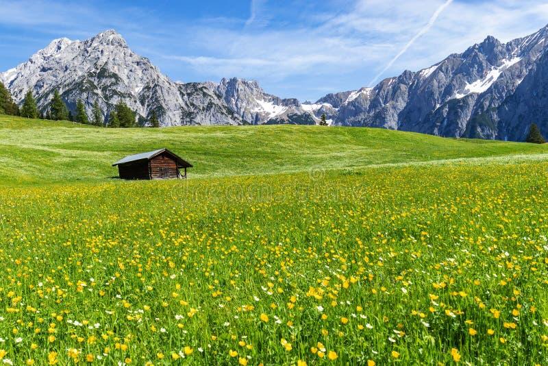 奥地利阿尔卑斯和草甸令人惊讶的看法在Walderalm,奥地利,格纳登瓦尔德,蒂罗尔地区附近 免版税库存图片