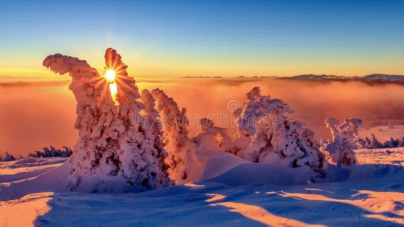 奥地利阿尔卑斯山脉日落时的树木 免版税库存照片