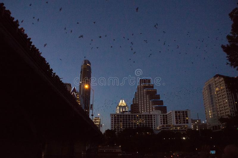 奥斯汀的国会大道桥梁棒  库存照片