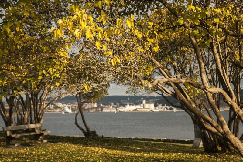 奥斯陆-海湾和它黑暗的水,晴朗的树 免版税库存图片