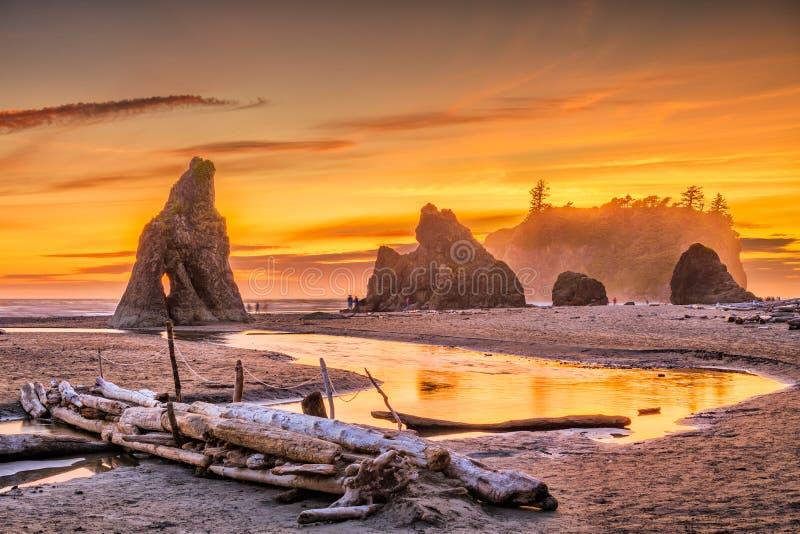 奥林匹克国家公园,华盛顿,红宝石海滩的美国 免版税库存图片