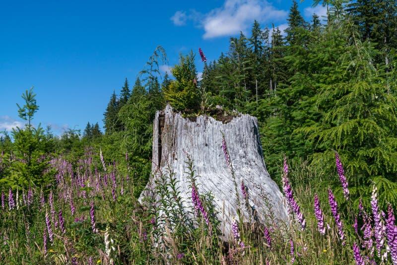 奥林匹克国家森林在一晴朗的7月天 免版税库存图片