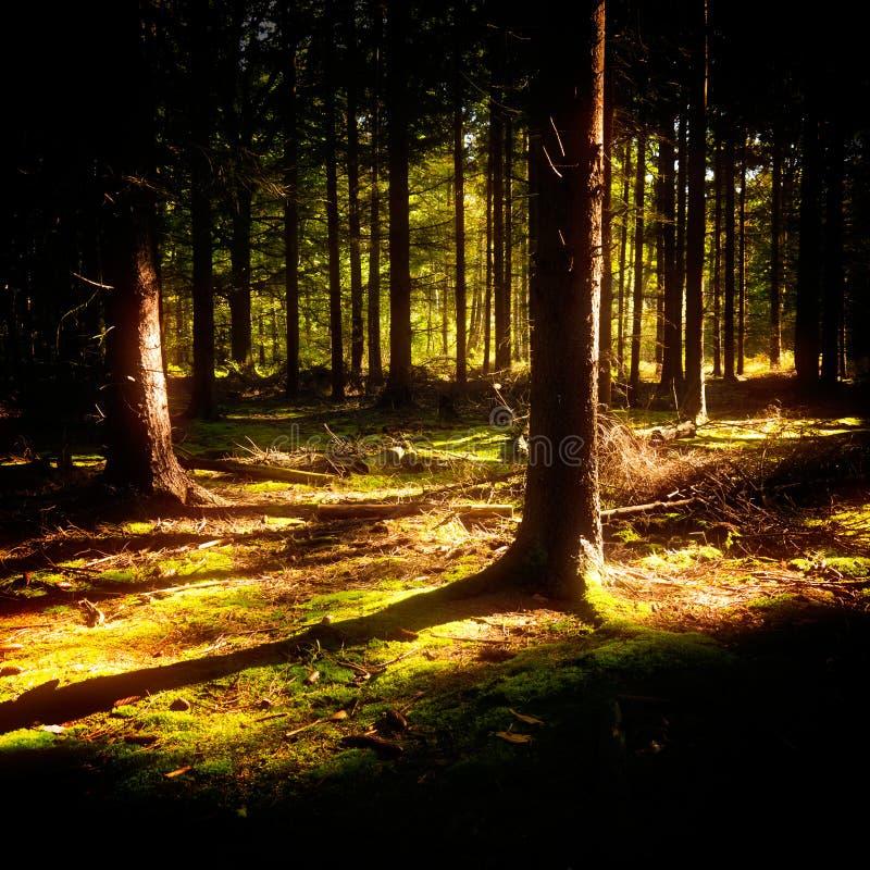Download 奥秘木头 库存照片. 图片 包括有 幻想, 木头, 结构树, beautifuler, 焕发, 神仙, 传说 - 30336684