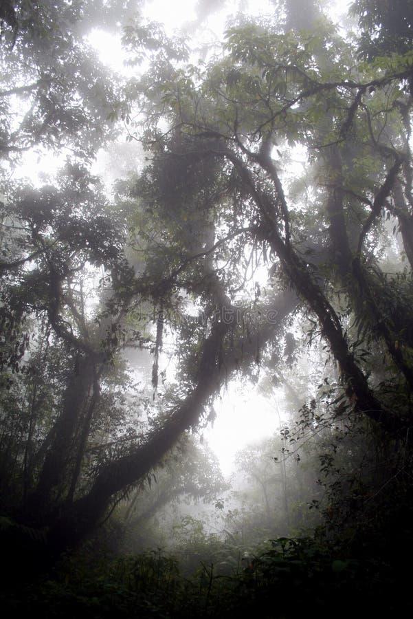 奥秘雨林 免版税图库摄影