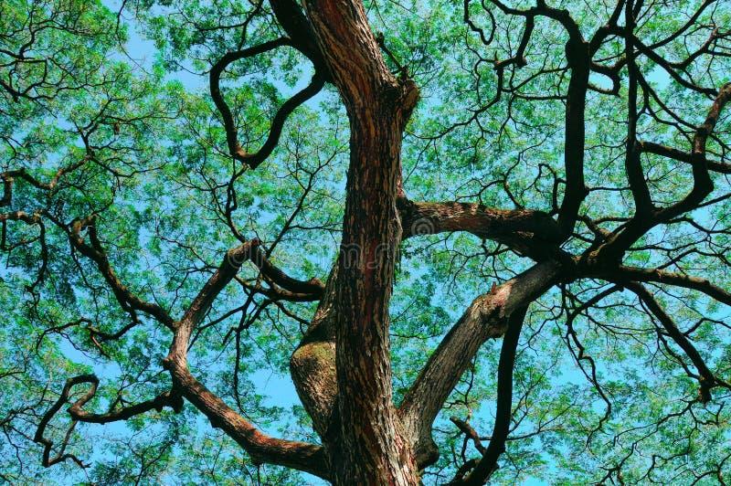 奥阿胡岛结构树热带谷waimea 免版税库存图片
