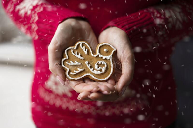 女人的手握着一只圣诞画的姜饼,它的形状是鸟 库存照片