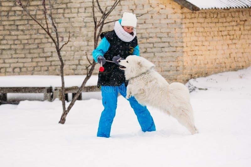 女孩与萨莫耶特人的狗衔接 戈梅利,白俄罗斯 免版税库存图片